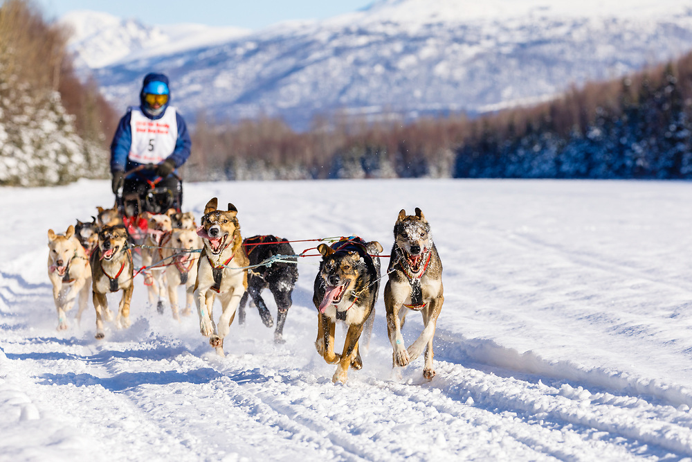 Musher Jeff Conn competing in the Fur Rendezvous World Sled Dog Championships at Campbell Airstrip in Anchorage in Southcentral Alaska. Winter. Afternoon.