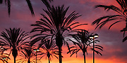 Palm trees silhouetted against a sunset sky in San Clemente, CA