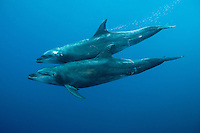 Bottlenose Dolphins <br /> <br /> Shot in Mexico