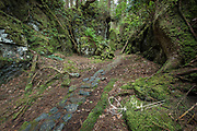 Forest path through the lush rainforest on SGang Gwaii, Haida Gwaii, Queen Charlotte Islands, Gwaii Haanas National Park, British Columbia, Canada.
