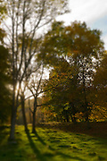 Backlit golden Trees, autumn foliage
