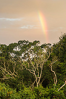 Rainbow over the coastal forest , Dwesa-Cwebe Marine Protected Area, Eastern Cape, South Africa