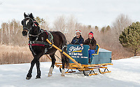 """The calendar says it's spring but it doesn't look like  """"Gilford"""" a 9 year old Arab Percherom minds while pulling an 1895 sleigh with Rick and Connie Moses on board Monday morning at Bolduc Park.  (Karen Bobotas/for the Laconia Daily Sun)"""