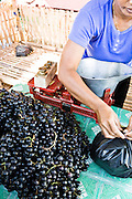 North Bali is famous for grapes and berries