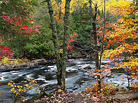 Beautiful fall nature scenery of Oxtongue river rapids. Algonquin, Muskoka, Ontario, Canada.