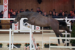 001, Popeye van de Nachtegaele<br /> Hengstenkeuring BWP - Lier 2018<br /> © Hippo Foto - Dirk Caremans<br /> 19/01/2018