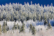 Hoarfrost on mountain slope. Mt. Robson Provincial Park<br />  Mt. Robson Provincial Park<br /> British Columbia<br /> Canada