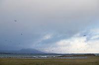 Fugler og hav.<br /> Foto: Svein Ove Ekornesv&aring;g