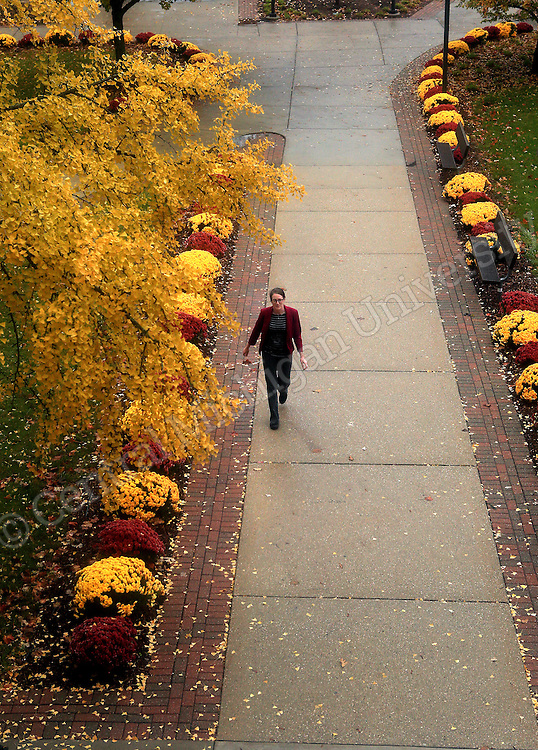 Mums line the sidewalk leading away from the Admissions entrance at Warriner Hall.  scenic. Central Michigan University photo by Steve Jessmore