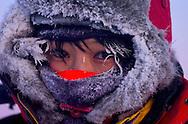 Ecotourist during a dog sledding tour, Vindelfjallen National Park, Vasterbotten, Lapland, Sweden.  Ecotourism