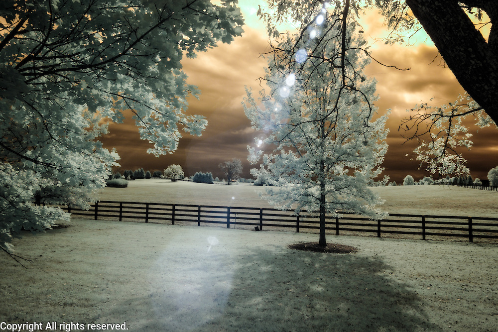 Infrared (IR) image - This image was made on the Ashland Farm in Versalles, Kentucky.  Horse racing in Central Kentucky is a billion dollar a year industry.  The barns on a farm like Ashland are fancier than most peoples' homes.  I was very fortunate to gain access and I regret that my skill level wasn't where it is now because I feel like I could have done so much more with that gift.