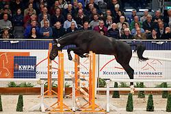 122, Kapieto<br /> KWPN Stallionshow - 's Hertogenbosch 2018<br /> © Hippo Foto - Dirk Caremans<br /> 31/01/2018