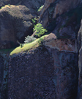 I used the dark shadows on the rock face to make the vibrant green tree on the edge of a cliff stand out. I took this unique photo in Pinnacles National Monument