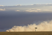 Fire in Savannah<br /> A fire sweeps across the savannah during the dry season<br /> Maasai Mara Reserve, Kenya