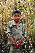 A Child Worker in the fields of Laos