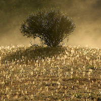 September 18, 2009. Hindman, Kentucky. A field of spider webs glisten in the morning sun and fog on the Combs Branch reclaimed surface coal mine. (Credit image: © David Stephenson/ZUMA Press)