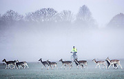 UNITED KINGDOM, London: 29 November 2016 A small herd of red deer stand amongst a frosty Richmond Park this morning as temperatures plummeted to -7C last night. Rick Findler / Story Picture Agency