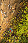 """Elaina Arenz climbing """"Leave It to Jesus,"""" 11c, Endless Wall, The New River Gorge"""
