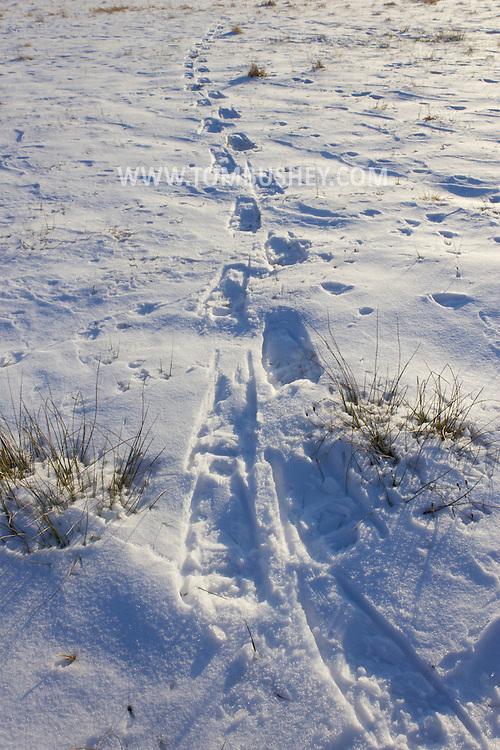 Salisbury Mills, New York - Winter scenes at Schunnemunk Mountain State Park on Jan. 6, 2013.