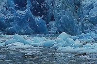 A Seal & South Sawyer Glacier