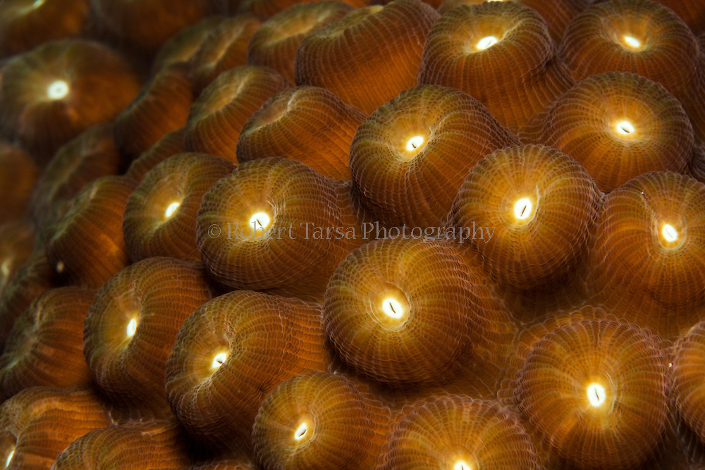Macro image of star coral.