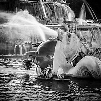 Chicago Buckingham Fountain seahorse in black and white.
