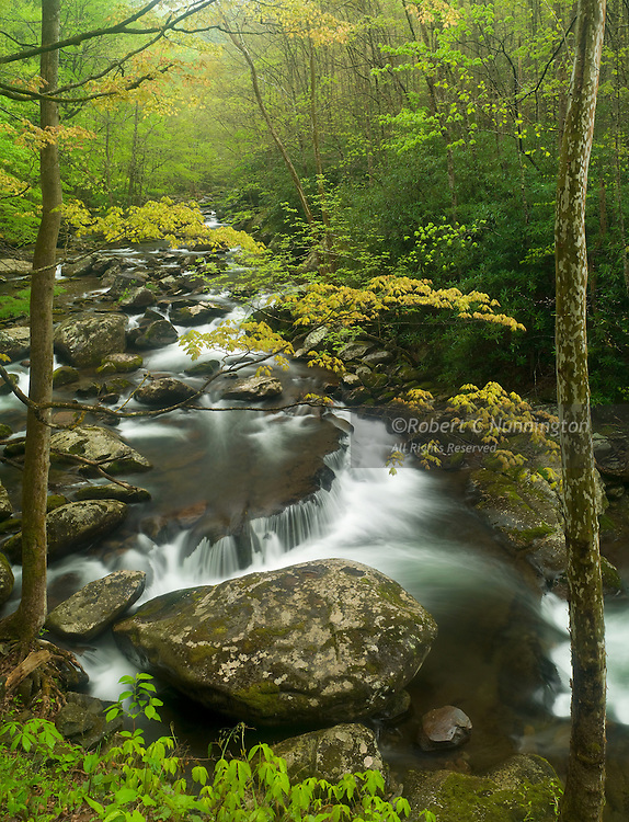 The Little River at Tremont, Great Smoky Mountains National Park, Tennessee, USA