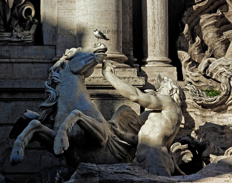 Trevi Fountain detail; seagull perched on the nose of a marble horse held by a marble man