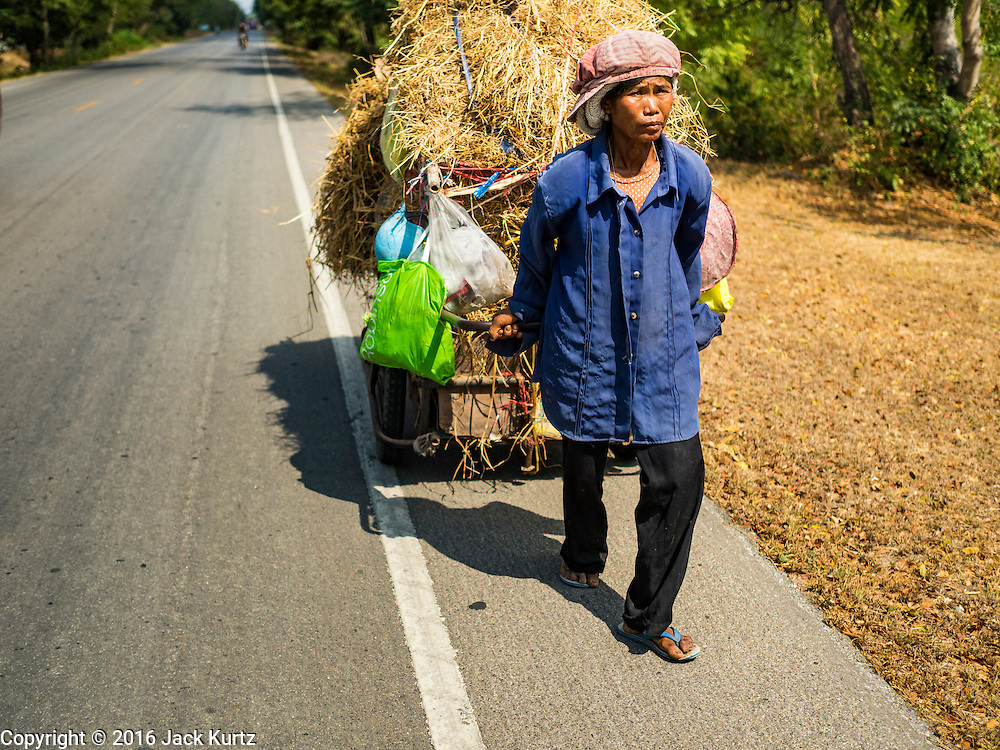 20 JANUARY 2016 - KHAM THALE SO, NAKHON RATCHASIMA, THAILAND: A woman pulls a cart of rice hay for her water buffalo back to her home in Nakhon Ratchasima province. The drought gripping Thailand was not broken during the rainy season. Because of the Pacific El Nino weather pattern, the rainy season was lighter than usual and many communities in Thailand, especially in northeastern and central Thailand, are still in drought like conditions. Some communities, like Si Liam, in Buri Ram, are running out of water for domestic consumption and residents are traveling miles every day to get water or they buy to from water trucks that occasionally come to the community. The Thai government has told farmers that can't plant a second rice crop (Thai farmers usually get two rice crops a year from their paddies). The government is also considering diverting water from the Mekong and Salaween Rivers, on Thailand's borders to meet domestic needs but Thailand's downstream neighbors object to that because it could leave them short of water.        PHOTO BY JACK KURTZ