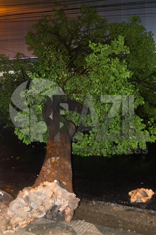 SÃO PAULO-SP-25.02.2015-QUEDA DE ÁRVORE SEM VÍTIMA/SÃO PAULO-Queda de árvore devido a chuva forte na Rua Jaguaribe bairro da Santa Cecília.Região central da cidade de São Paulo na noite dessa quarta-feira,25.(Foto:Kevin David/Brazil Photo Press)
