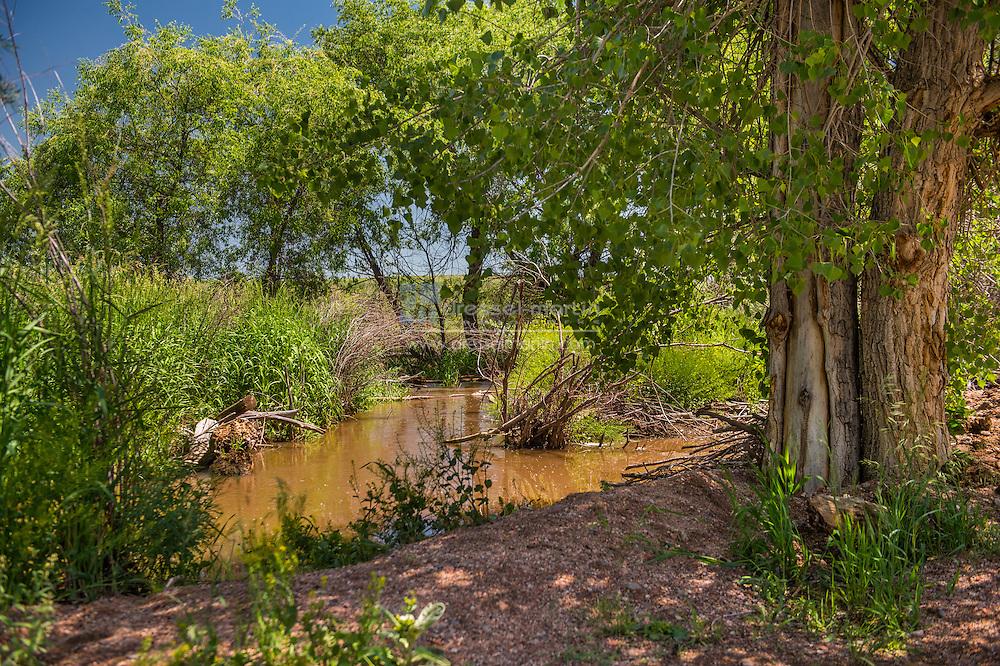 chatfield deer creek wetlands restoration