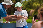 Select turtles can be handled at the turtle handling tank, Turtle Farm, Grand Cayman.