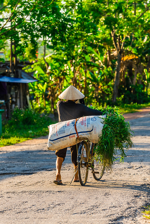 A farmer bringing home grasses to feed livestock in the countryside outside Hue, Central Vietnam.