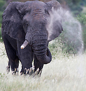 2011 Africa Safari, Kenya and Tanzania