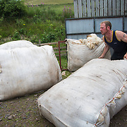 Sheep shearing on a farm in the Scottish Borders July 26 2016. A team of two sheep shearers cut sheep owned by farmer Stewart Ranciman. The team plus helpers gets through 400 sheep in one day taking 1min 20 sec. per sheep. Ranciman's sheep live in the hills and only come into the farm to lamb and to get cut.