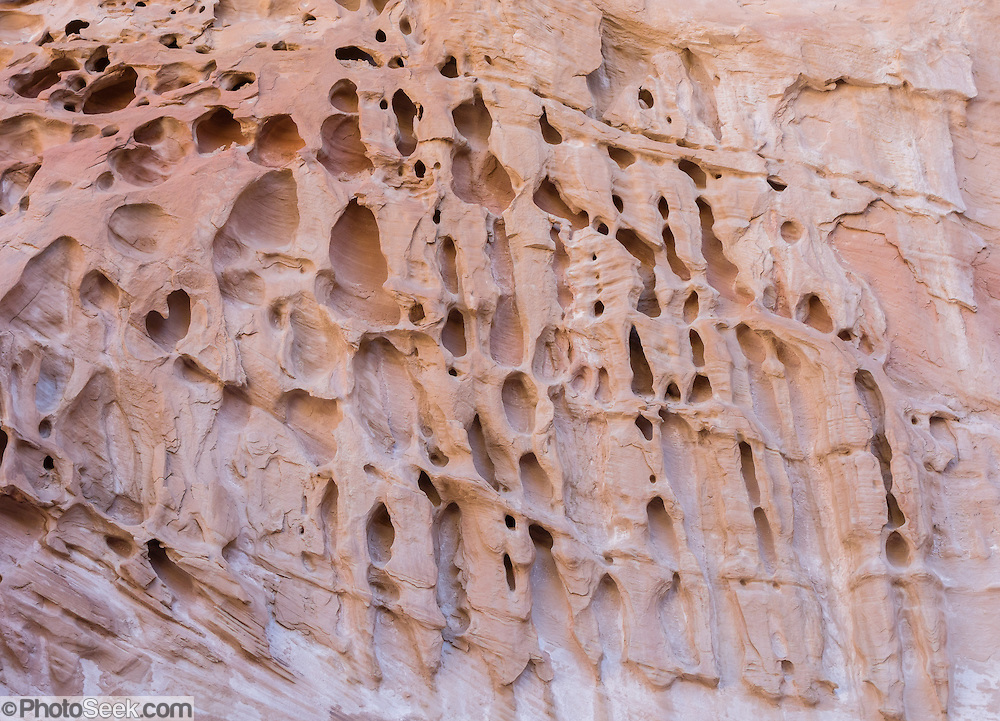Intricate honeycombs of weathered sandstone decorate Crack Canyon, on federal BLM land in San Rafael Swell, near Goblin Valley State Park, Utah, USA. Honeycomb weathering: rainwater soaks into sandstone, dissolves its cement, and redeposits it near the surface as the water evaporates, forming a resistant outer layer, pockmarked with holes into the soft inner layers enlarged by wind and moisture. The Bureau of Land Management (BLM) is an agency within the United States Department of the Interior that administers American public lands.