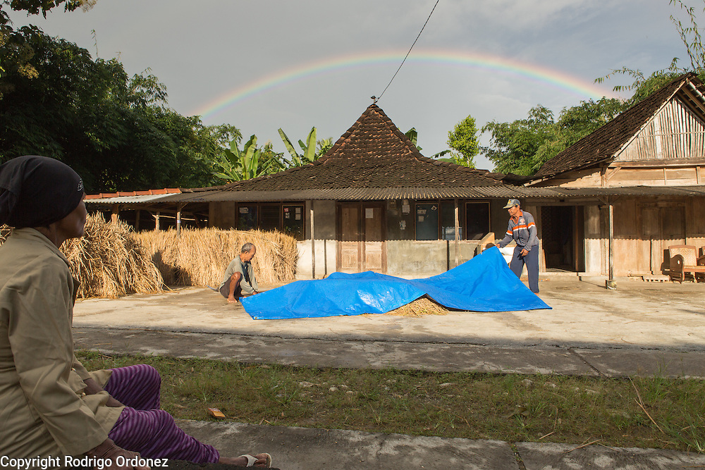 A rainbow appears in the sky as local residents check rice covered by a tarpaulin in Wareng, Wonosari subdistrict, Gunung Kidul district, Yogyakarta Special Region, Indonesia. On the foreground (left) is Suparjiyem's mother Jumiati, 69.