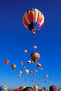Hot air balloons rising in morning light at the International Balloon Fiesta, Albuquerque, New Mexico