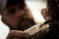 DETAIL OF A TAG ON A HARVESTED RIO GRANDE TURKEY
