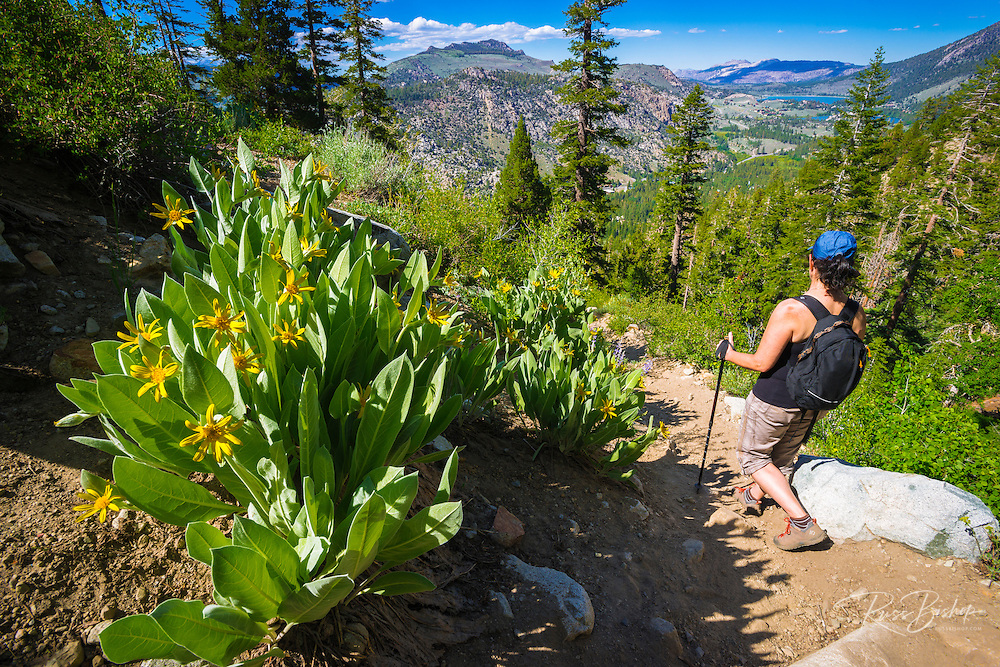 Hiker on the Fern Lake Trail, Inyo National Forest, June Lake, California