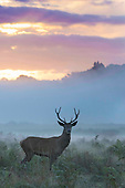 Richmond Park Sunrise