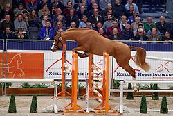 248, Key West<br /> KWPN Stallionshow - 's Hertogenbosch 2018<br /> © Hippo Foto - Dirk Caremans<br /> 31/01/2018