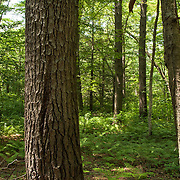 Summertime forest in Eastern, Massachusetts