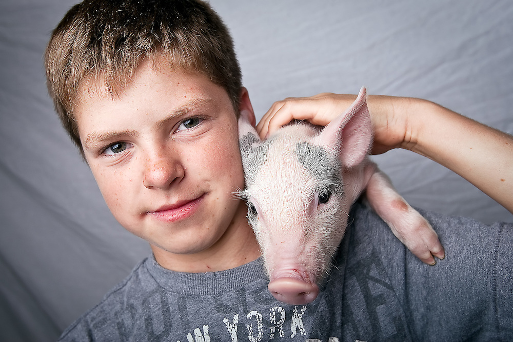 JEROME A. POLLOS/Press..Wyatt Howard's 18-month-old pig Luann had a litter of 13 piglets that were on display at the fair. Howard, 12, and his york-hamp pig were awarded a grand champion award for breeding.