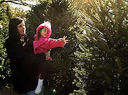 20031129 Christmas Tree's