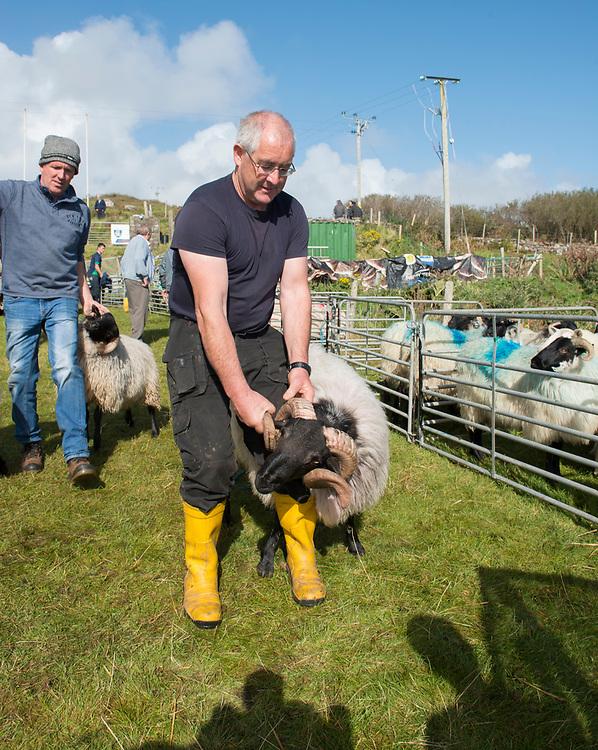 Clare Island Ram Fair &amp; Sheep Dog Trials.<br /> Micheal O'Malley and Eammon Heanue. Pic: Michael Mc Laughlin