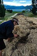 Nick Mills, winemaker @ Rippon. Biodynamic composting