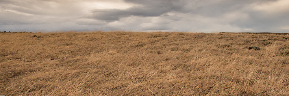 Much of Iceland looks like this in the winter - the blowing grasses look almost like water.