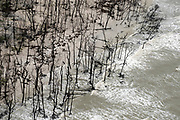 Inundated mangrove trees on the Atlantic coast near the mouth of the Pará River.