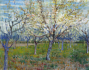Painting of The Pink Orchard, 1888. By Vincent van Gogh. Oil on Canvas. Part of an intended triptych of orchard paintings by Van Gogh.